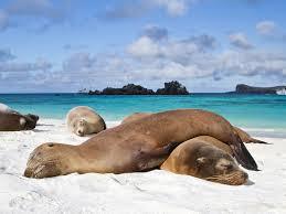 Galapagos 2